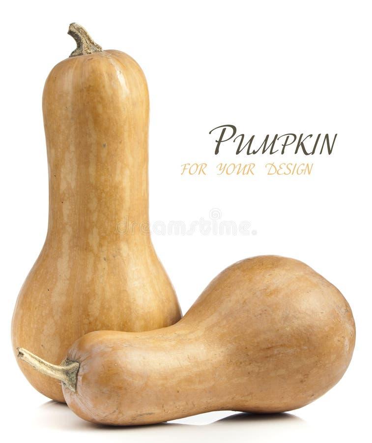 Ripe pumpkin stock images