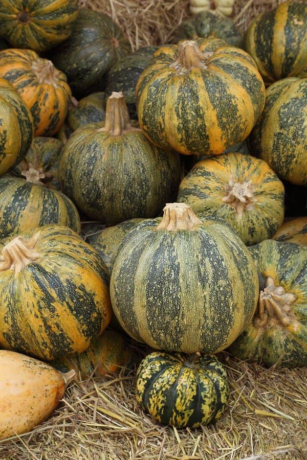 Ripe pumpkin royalty free stock images