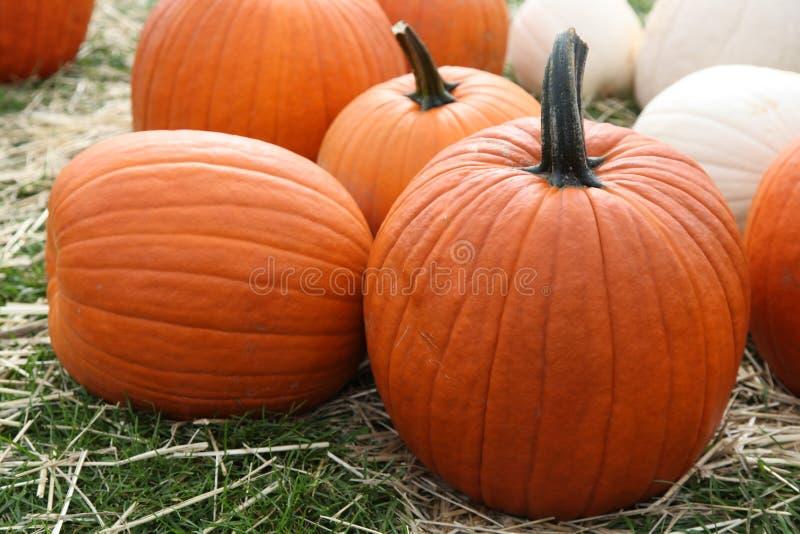 Ripe pumpkins stock photos