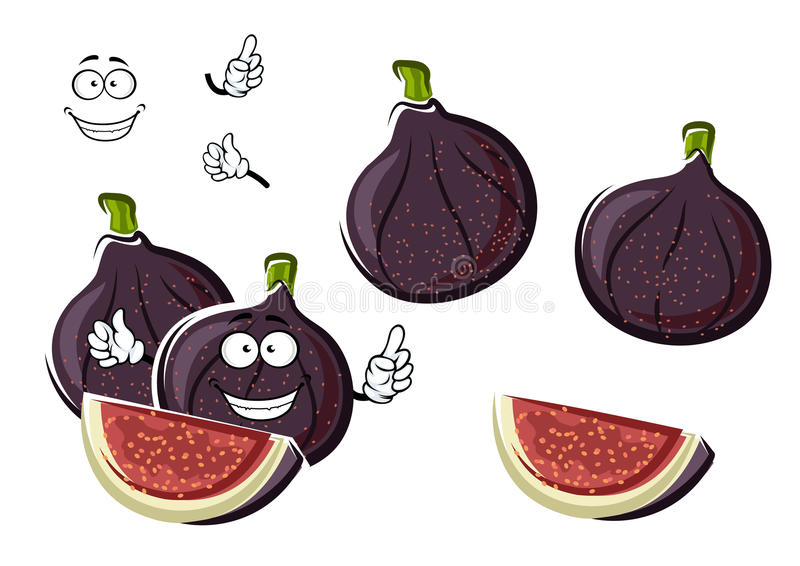 Ripe purple fig fruits cartoon character. Fresh ripe and sweet purple fig fruits cartoon character with crunchy seeds and fibrous pink flesh on the cut. Happy vector illustration