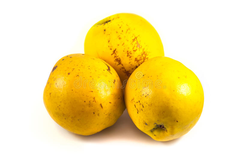 Download Ripe Quinces Isolated On White Stock Photo - Image: 83710076