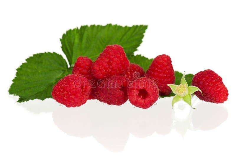 Download Ripe raspberries stock photo. Image of berry, image, nobody - 26089746