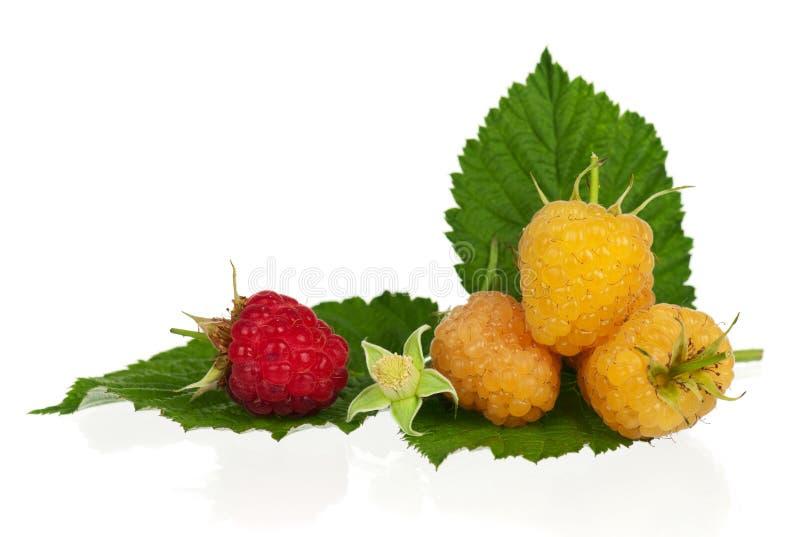 Download Ripe Raspberries Stock Image - Image: 26821631