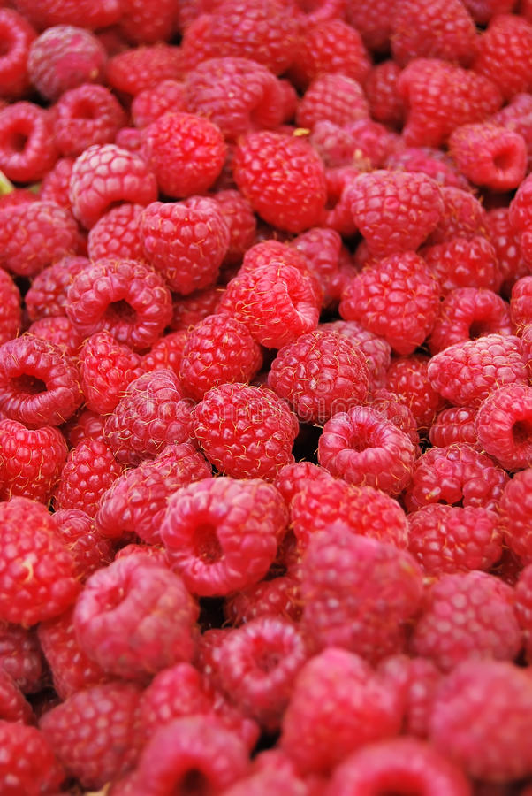 Download Ripe raspberry stock image. Image of raspberry, dessert - 10961915