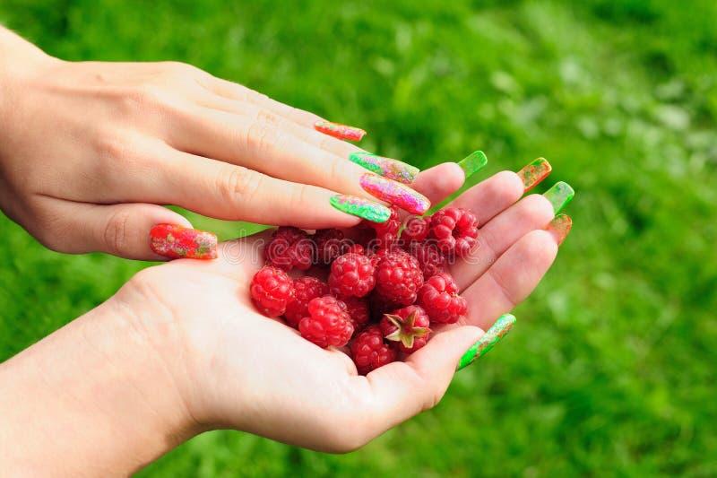 Download Ripe raspberry stock image. Image of girl, green, fruit - 16053545