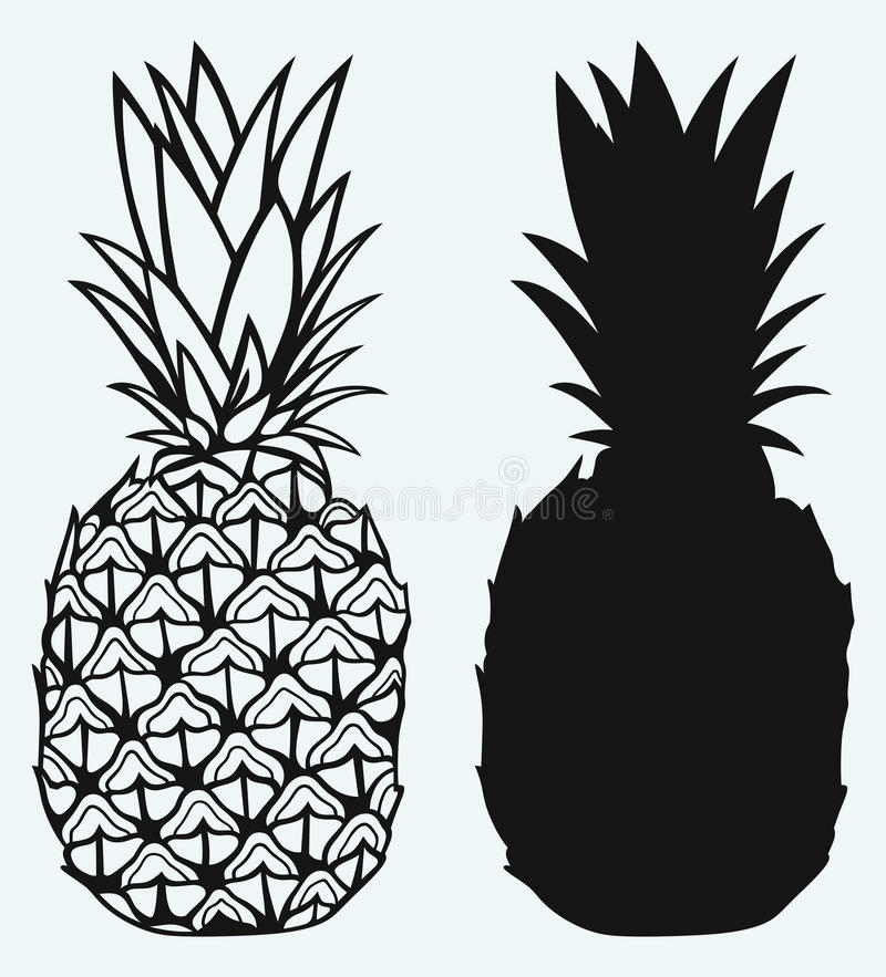 Ripe raspberry with leafRipe tasty pineapple vector illustration