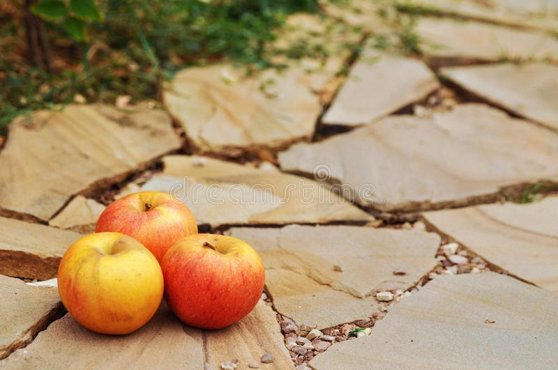 Ripe red apples on a stone background. The harvest in the fall. stock photo