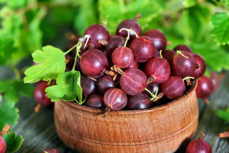 Ripe red gooseberries in wooden bowl stock images