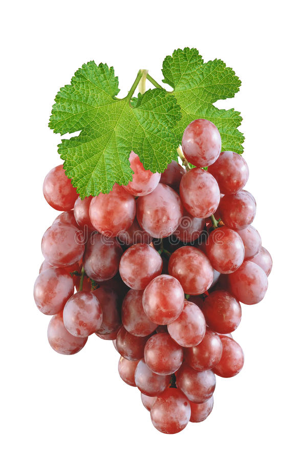 Ripe red grapes isolated royalty free stock images