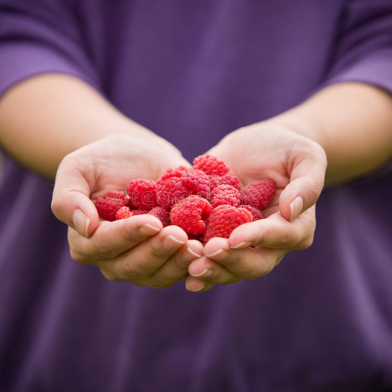 Ripe red raspberries in the woman hands. Organic raspberries in hands. Healthy food and raspberry concept stock photography
