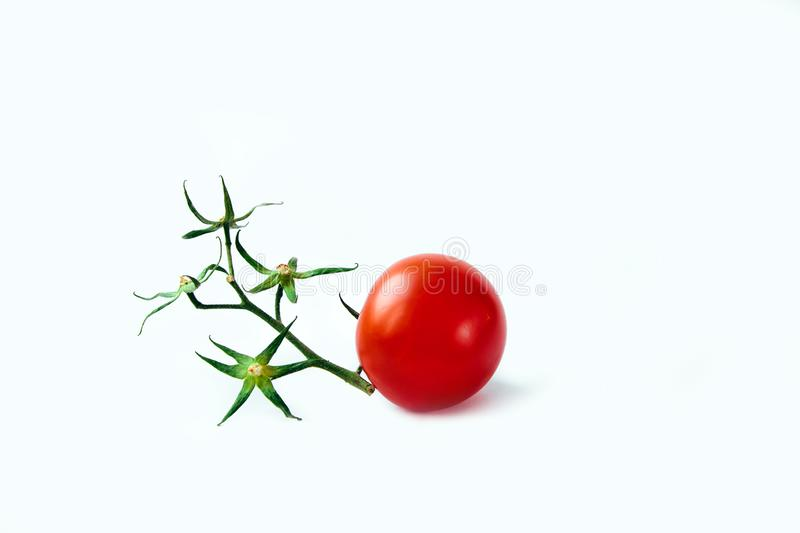 Ripe red tomato white background green branch twig dry one isolate star flower stock images