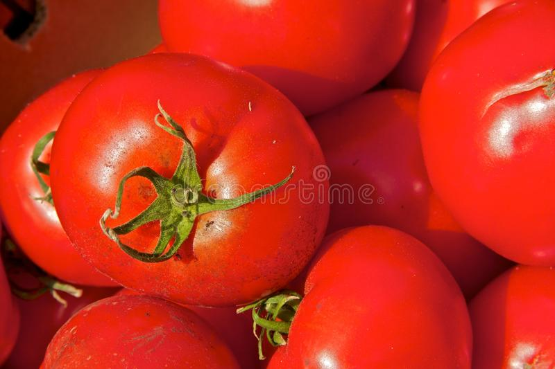Ripe red tomatoes at the market stock photography