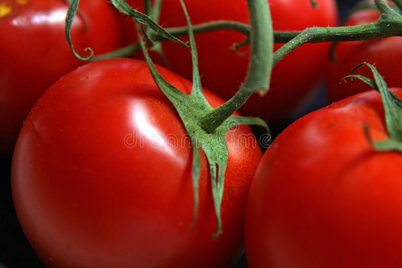 Ripe Red Tomatos royalty free stock photo