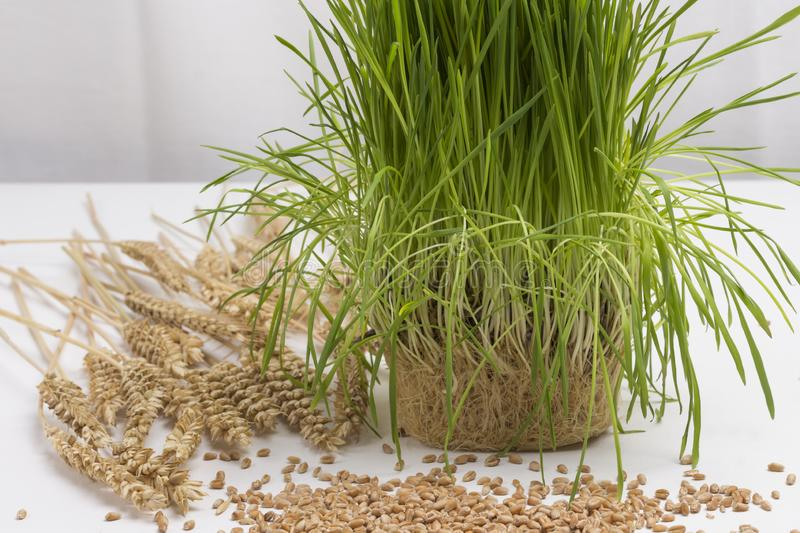 Ripe spikelets of wheat and wheat grains. Germinated seeds of wheat. Healthy lifestyle. Natural food. Healthy eating concept stock photos