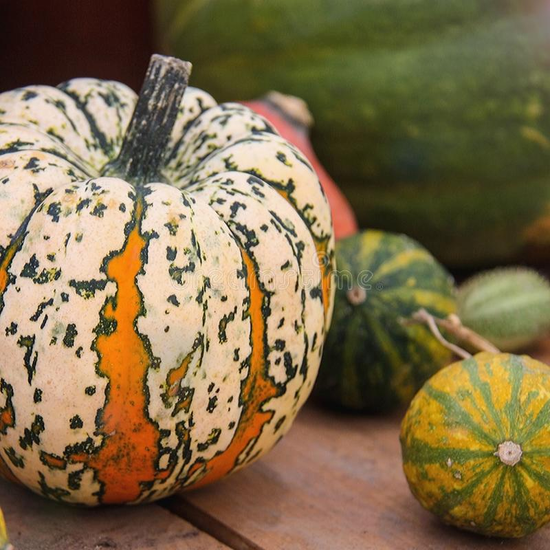 Ripe spotted striped round pumpkin yellow and green with other pumpkins of different sizes on the background of a wooden table. Au stock image