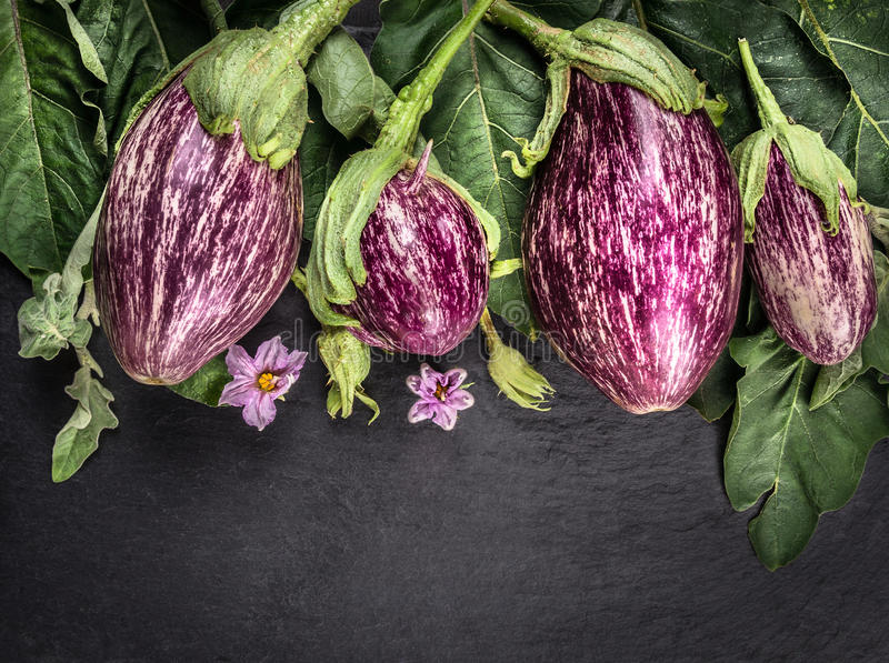 Ripe striped eggplants with leaves and flowers on dark slate table royalty free stock images
