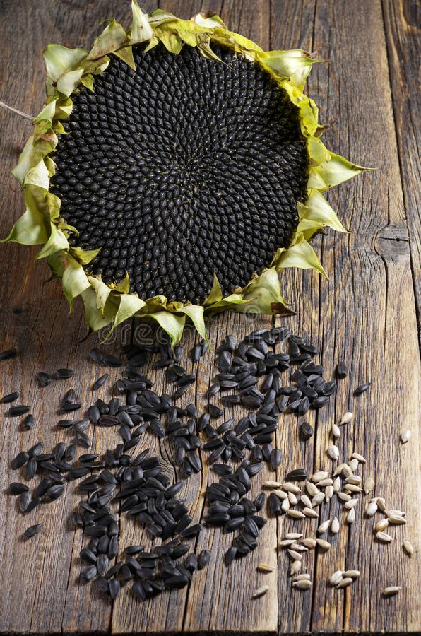 Sunflower and seeds. Ripe sunflower and seeds on an old wooden table royalty free stock image