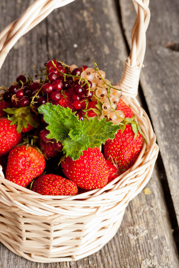 Ripe sweet strawberries, currants in wicker basket and mint leav. Es on wooden background, close up royalty free stock photo