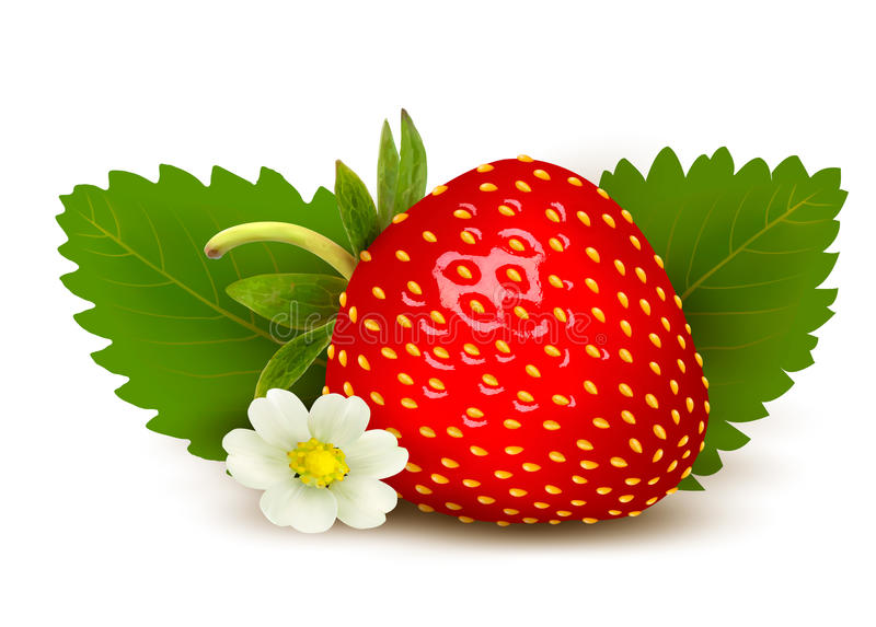 Ripe sweet strawberry and flower with leaves. royalty free illustration