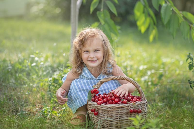 Ripe and sweet summer berries in the orchard royalty free stock images