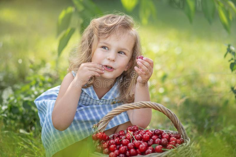 Ripe and sweet summer berries in the orchard royalty free stock photography