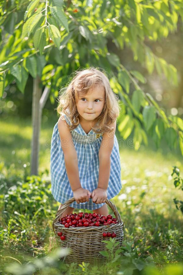 Ripe and sweet summer berries in the orchard stock photo