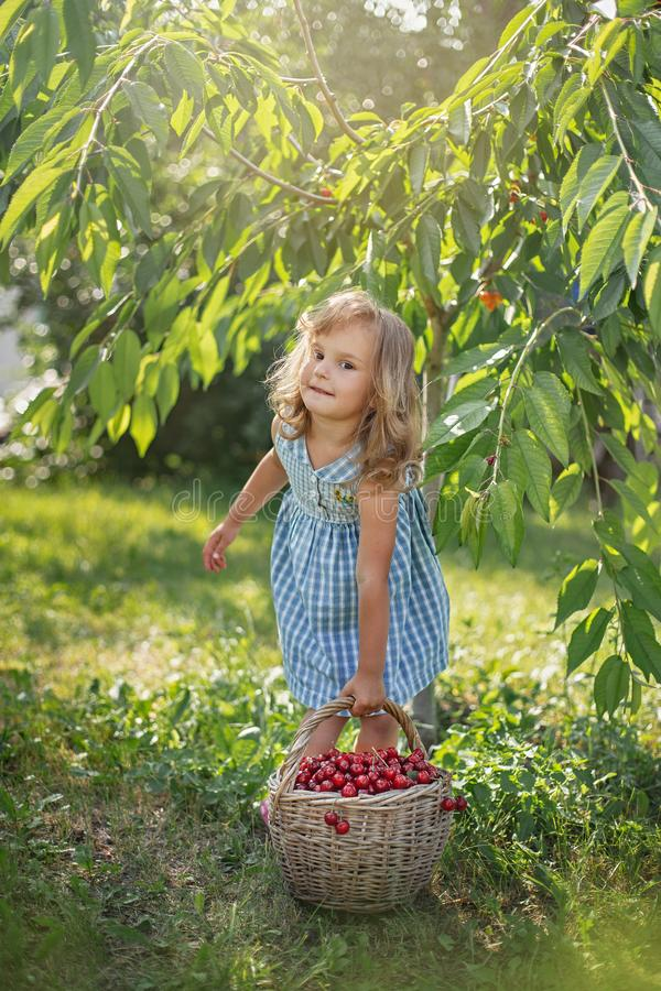 Ripe and sweet summer berries in the orchard royalty free stock photos