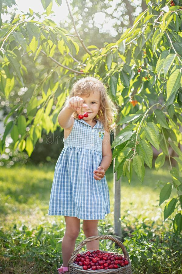 Ripe and sweet summer berries in the orchard stock images