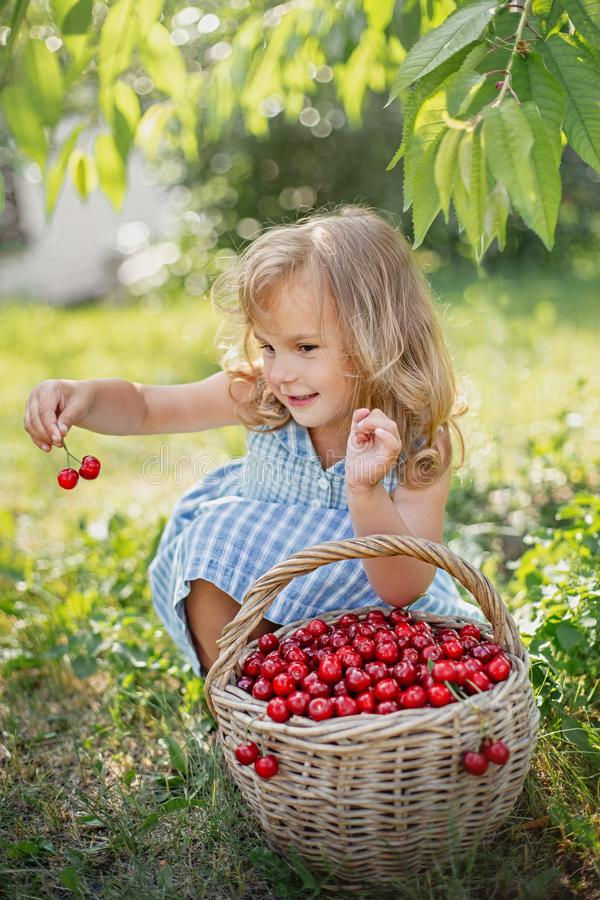Ripe and sweet summer berries in the orchard stock photography