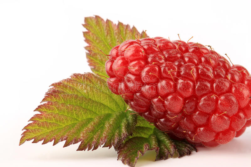 Download Ripe Tayberry stock image. Image of macro, cultivated - 14858179