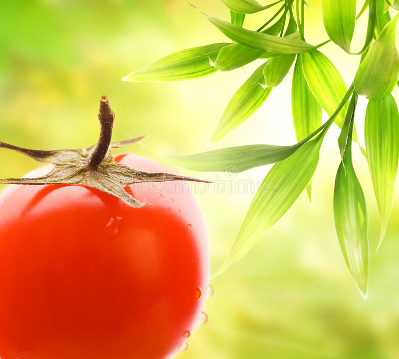 Ripe tomato royalty free stock photos
