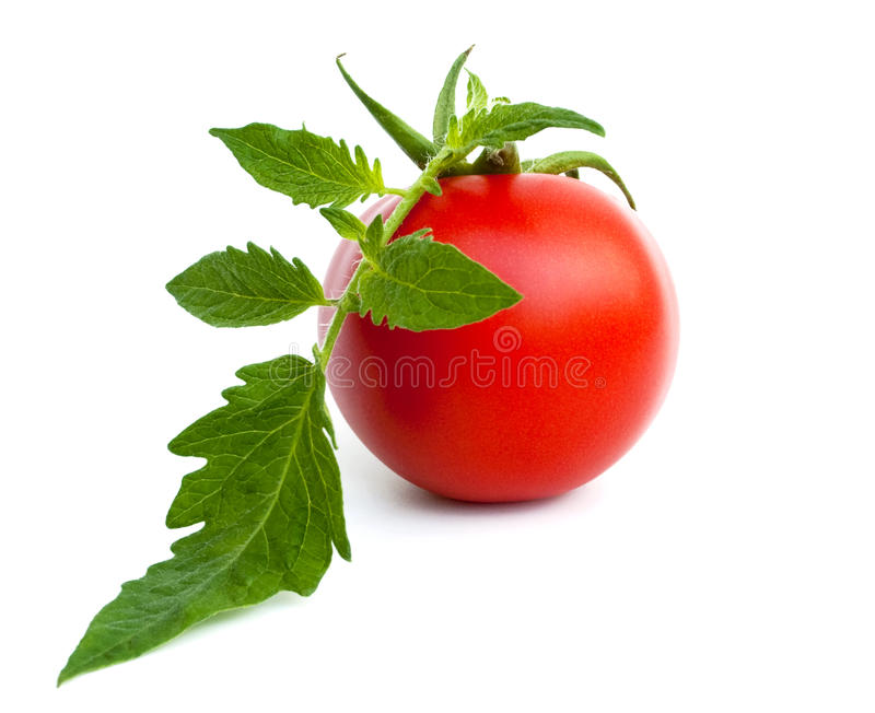 Ripe tomato with leaves royalty free stock images