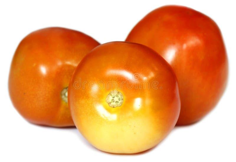Download Ripe Tomato stock image. Image of organic, nature, shiny - 39510269