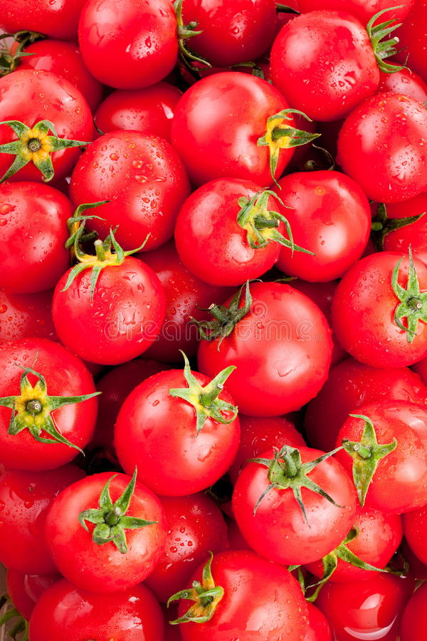 Download Ripe Tomatoes Royalty Free Stock Photography - Image: 26759337