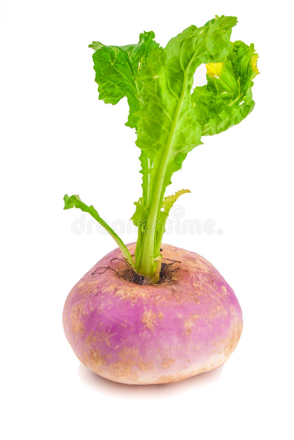 Ripe turnip. Isolated on white royalty free stock photography