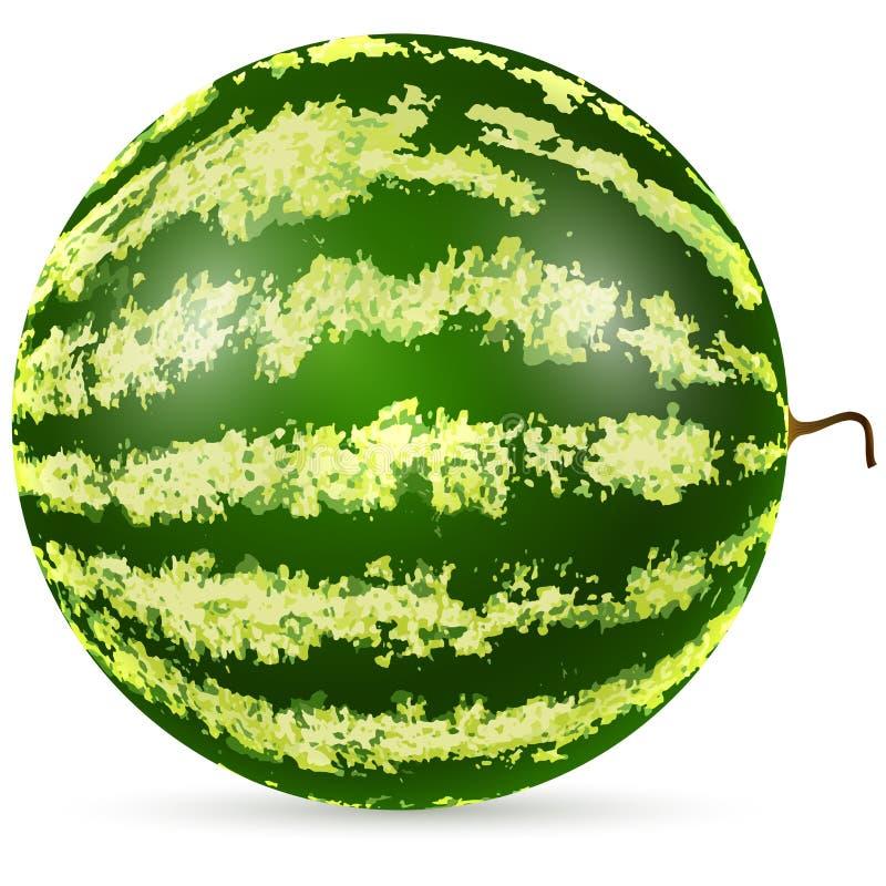 Download Ripe watermelon stock vector. Image of round, health - 32081530