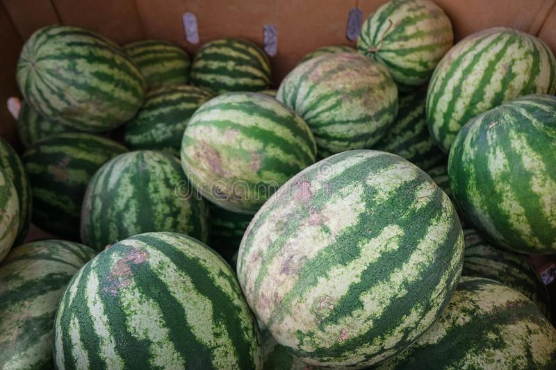 Pile of Watermelons stock photography