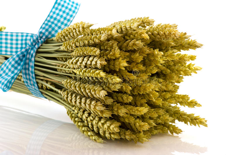 Download Ripe Wheat With Checked Ribbon Stock Photo - Image: 17281900