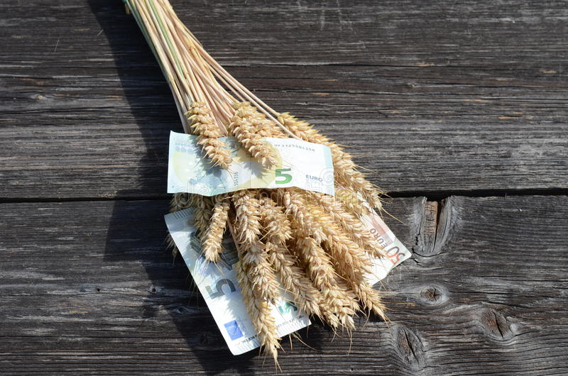 Ripe wheat ears and euro money banknote concept. Ripe wheat ears and euro money banknote agriculture harvest concept stock photography