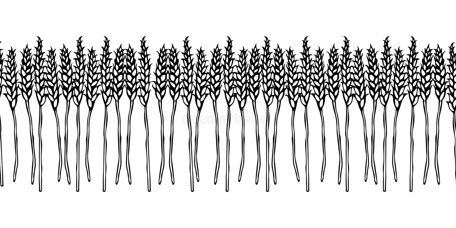 Ripe Wheat Spikelets Endless Brush. Border Ribbon of Malt with Space for Text. Farm Harvest Template. Realistic Hand Drawn Illustr. Ation. Savoyar Doodle Style vector illustration