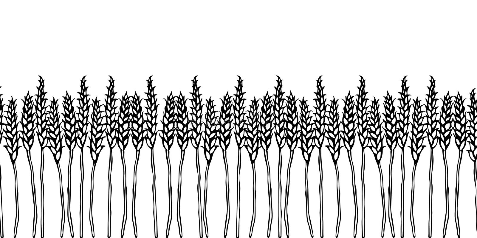 Ripe Wheat Spikelets Endless Brush. Border Ribbon of Malt with Space for Text. Farm Harvest Template. Realistic Hand Drawn Illustr. Ation. Savoyar Doodle Style royalty free illustration