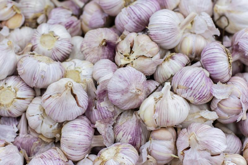 Ripe white garlic whole in a dry peel background. Spicy spice fresh garlic, healthy vegetable garlic top view. A large pile of. Ripe white garlic whole in a dry stock photos