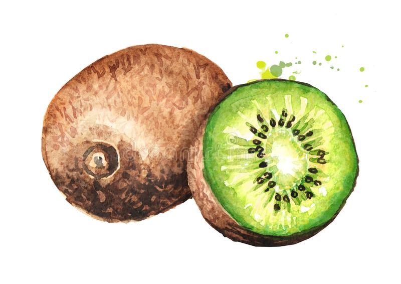 Ripe whole kiwi fruit and half kiwi fruit. Watercolor hand drawn illustration isolated on white background royalty free illustration