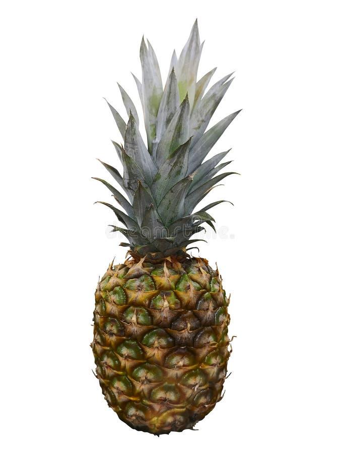 Ripe whole pineapple isolated on white. single whole pineapple isolated on white background stock image