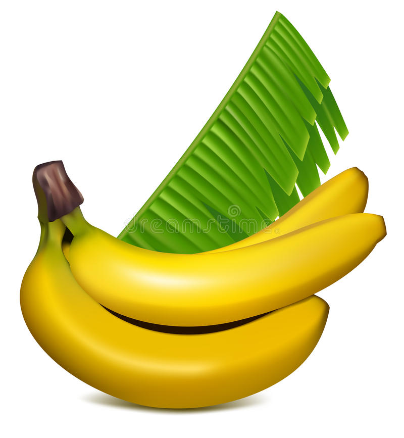 Download Ripe Yellow Bananas With Leaves. Royalty Free Stock Photography - Image: 12578307
