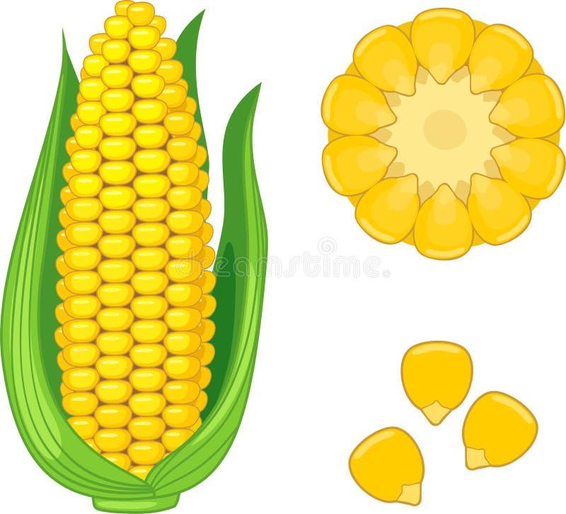 Corn clipart 3   Nice clip art