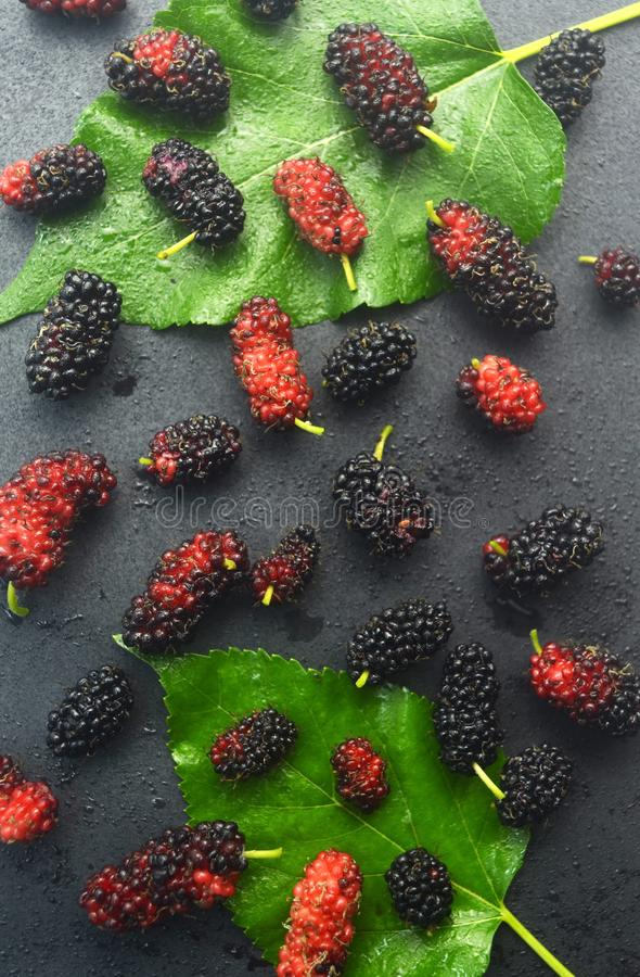 Riped Mulberry fruits on black background. Mulberry riped fruits black background sweet green leaf water fresh stock photography