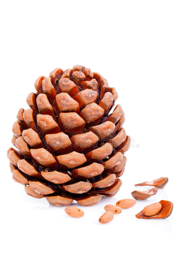 Download Ripened Cone Royalty Free Stock Images - Image: 21712899