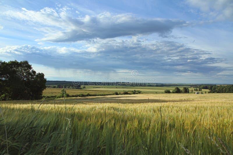Ripened grain with cloudy sky stock photos