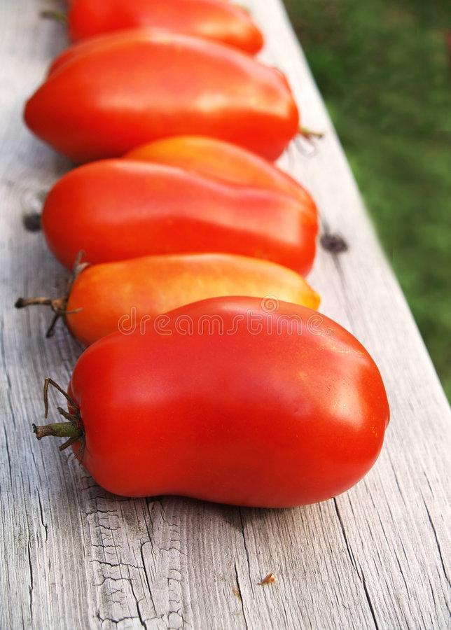 Download Ripening tomatoes stock photo. Image of summertime, delicious - 3056178